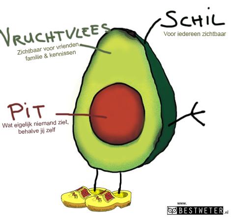 avocado binnenkant dwarsdoorsnede