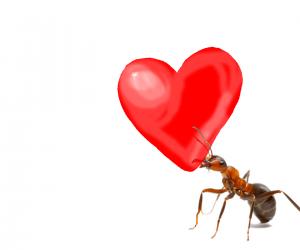 mier draagt hart mierenmedelijden Bestweter